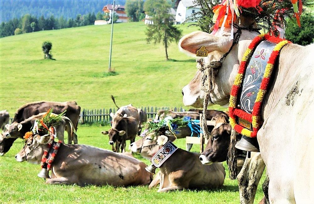 Südtirol - Almabtrieb Meransen - Konzerte - Musikreise