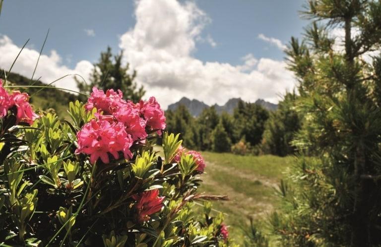 Alpenrosen Südtirol Musikreise Konzert Unterkunft