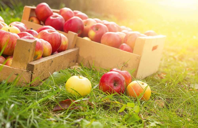Apfelverkostung-Brixen