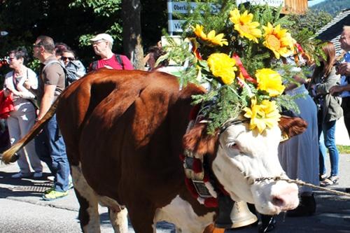 Almabtrieb und Meransner Bauernfest mit Vincent und Fernando – September 2021