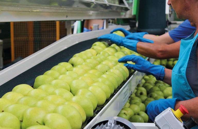 Äpfel von Melix in Südtirol