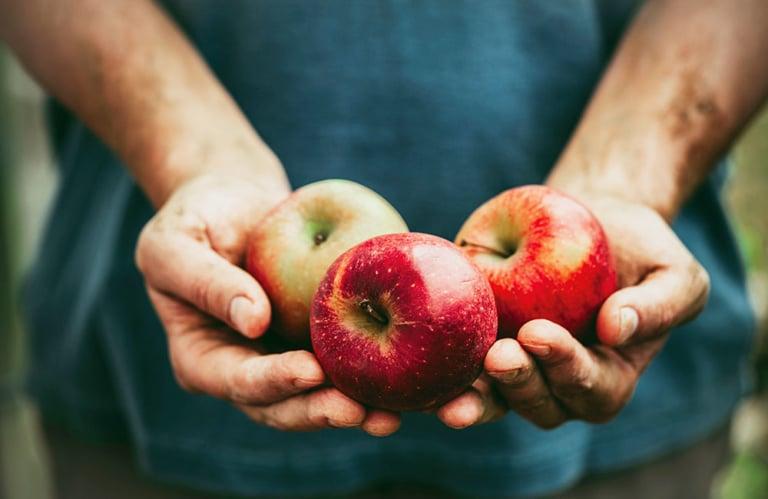 Apfelverkostung Melix