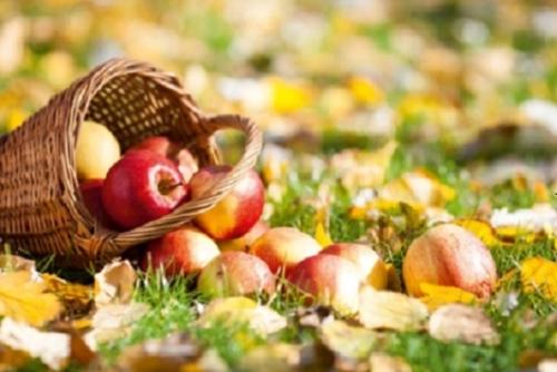 KOMBI: Südtiroler Apfel – Brixen – Wein im Schloss / Apfelblütenwanderung