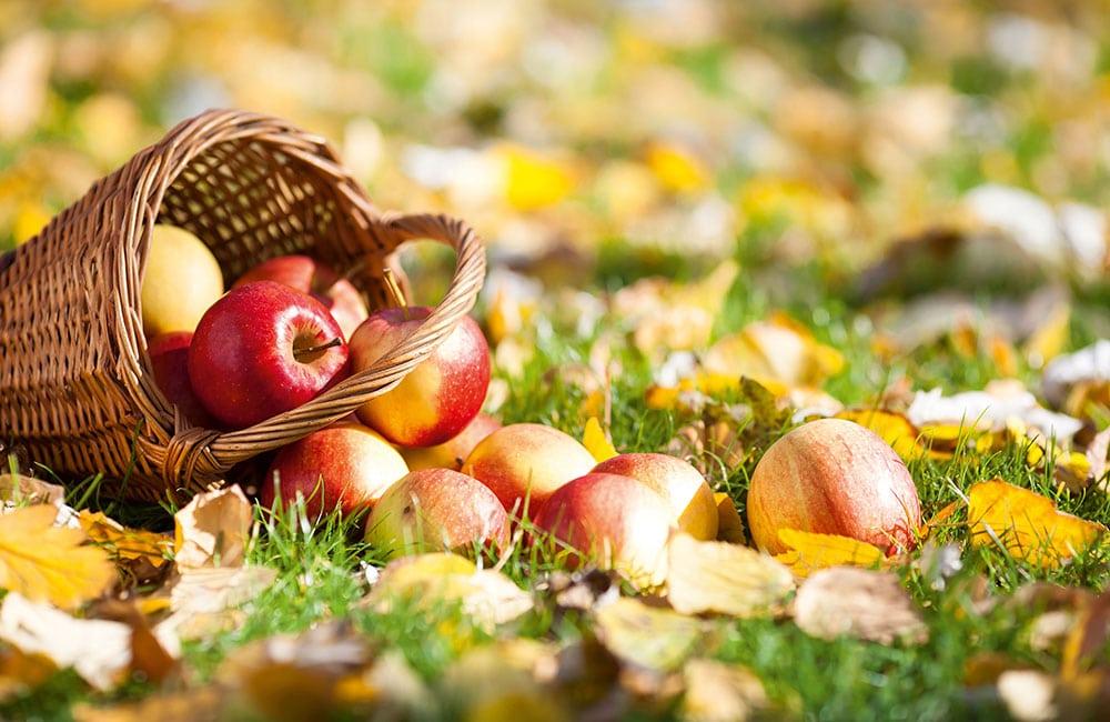 Äpfel aus Südtirol Brixen Melix