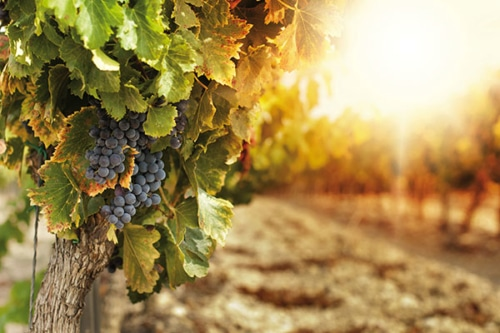Weinreise, auf den Spuren Südtiroler Weinseligkeit